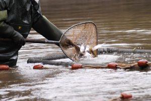 Tarifs des poissons d'étang