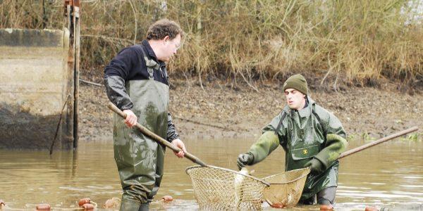 Assistance et conseils techniques en milieu aquatique