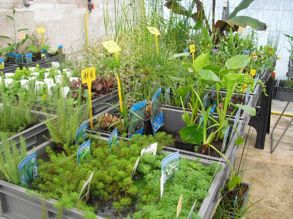 Bassin de jardin for Vente plante jardin