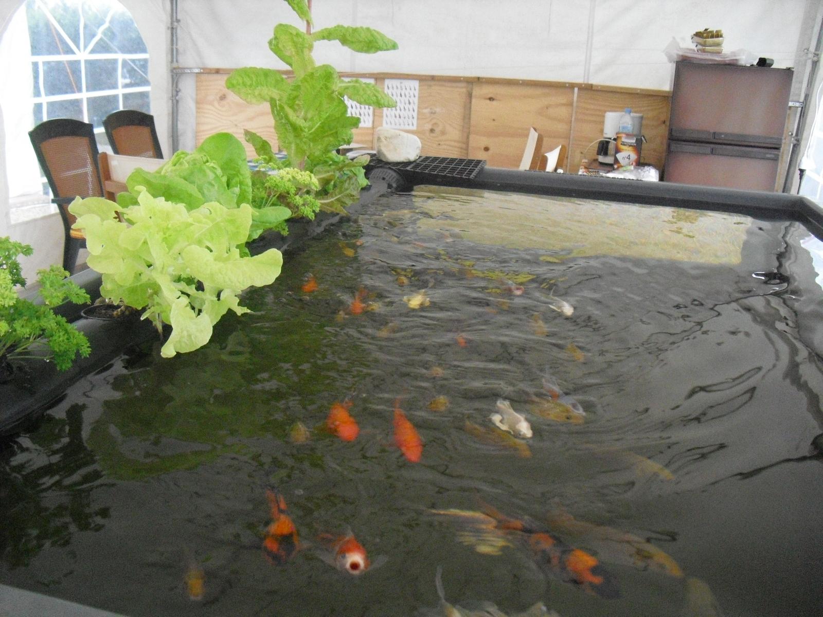 bassin potager aquaponique