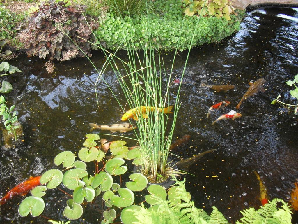 Paniers et terreau pour les plantes aquatiques du bassin for Eclairage pour bassin aquatique