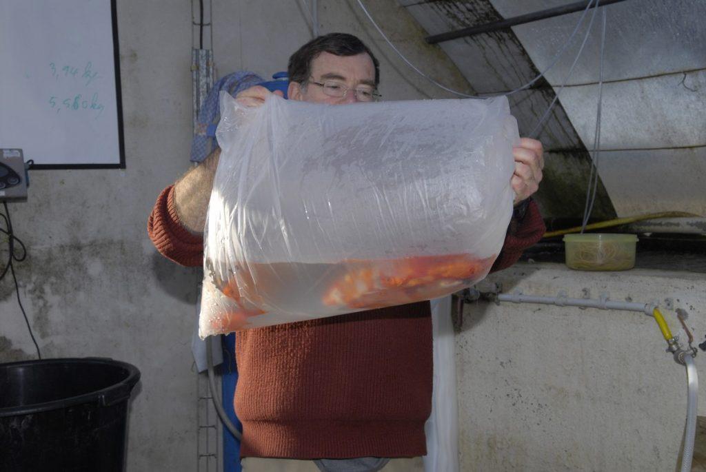 transport des poissons