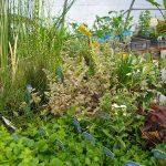 Vente de plantes aquatiques et de marais
