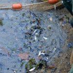 les poissons d'étang
