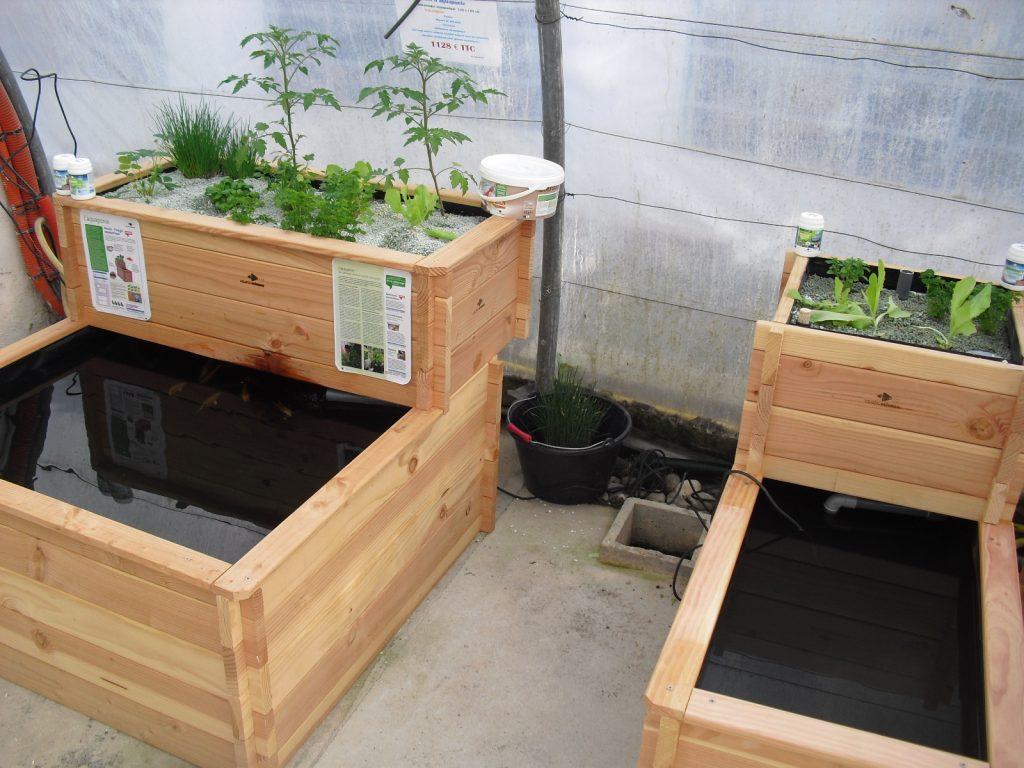 Le bassin potager aquaponique associant plante et poisson for Bassin interieur pour poisson