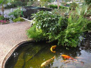 Matériel pour bassin de jardin