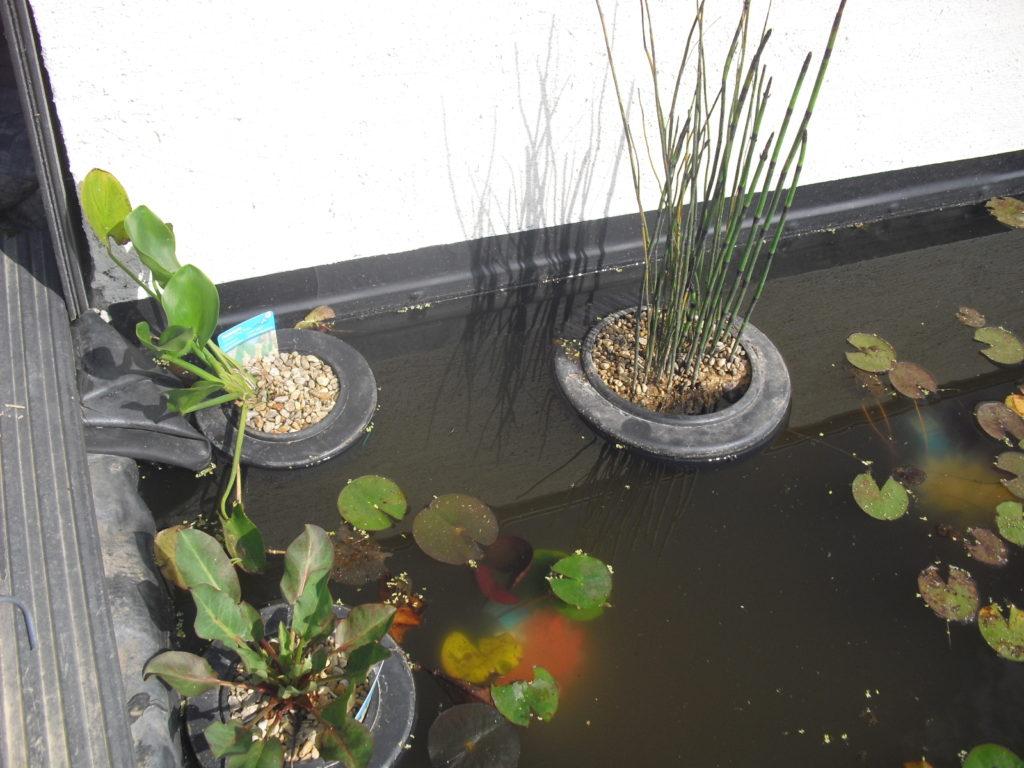 paniers et terreau pour les plantes aquatiques